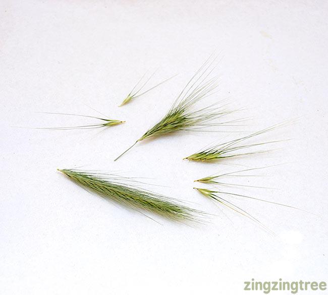 Wild-Grass-Seed-Head-Parts