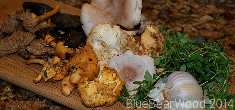 Wild Mushroom Toast