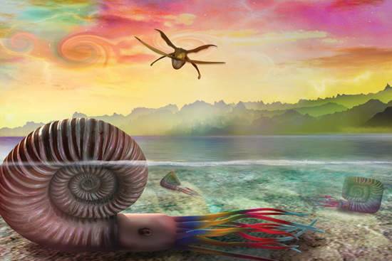 Rockfords-Opera-Ammonite-Sea
