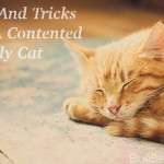 Tips And Tricks For A Contented Family Cat
