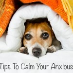 Top Tips To Calm Your Anxious Dog