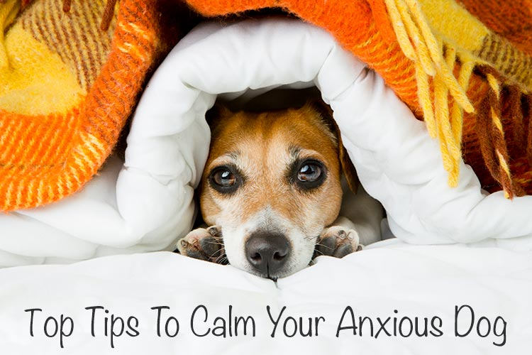 Top Tips To Help Calm Your Anxious Dog