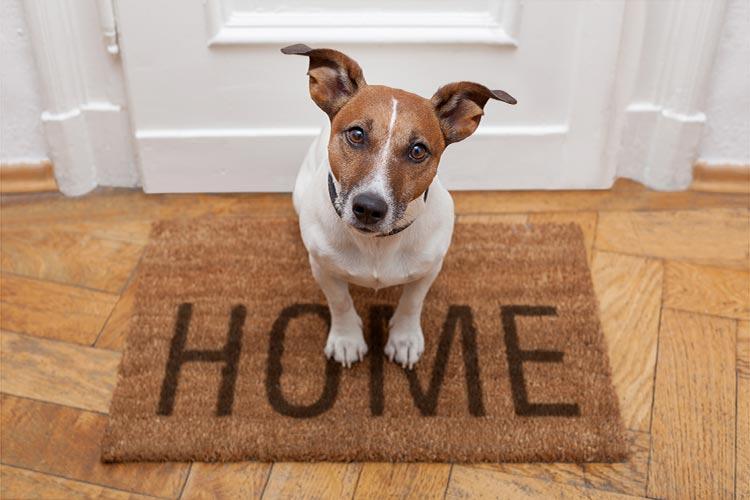 happy-dog-at-home