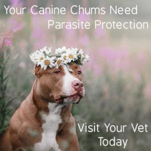 Pet Parasites Action