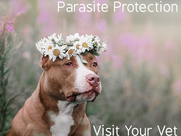 Do You Know Your Pet Parasites & How To Protect Your Family & Canine Chums?
