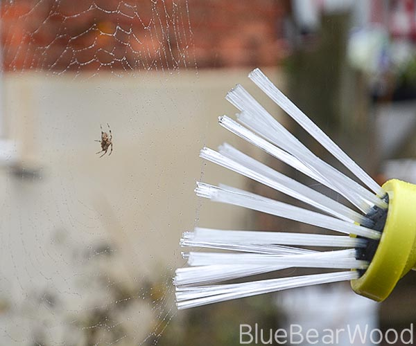 The easiest way to catch a spider