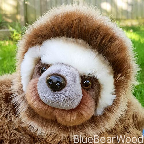 BBC Planet Eart Sloth II