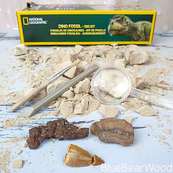 Fossil Specimens In The Dino Fossil Dig Kit