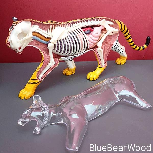 Tiger Anatomy Model by Kosmos